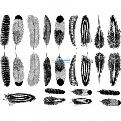 Calca Decal Plumas Pequeñas Negro